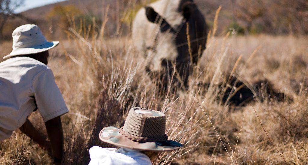 safari 1024x550 - 5 Great Voluntourism Trips for 2010
