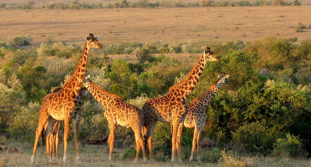 3213958192 7b91e54e12 b 1024x550 - See the World in Extraordinary Ways: Volunteering on Safari